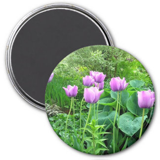 Purple Tulips Magnet