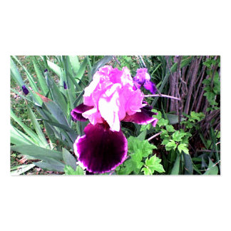 Purple Velvet Iris Business Card