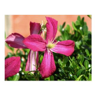 Purple Vine Flower Postcard