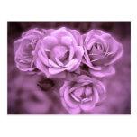 Purple Vintage Roses Postcard