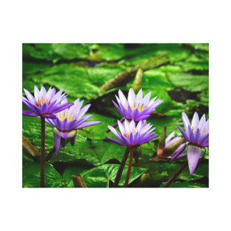 Purple Water Lilies Color Canvas Print