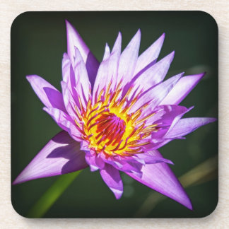 Purple Water Lily Beverage Coaster