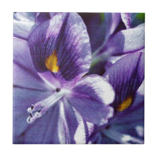 Purple Water Lily Tile