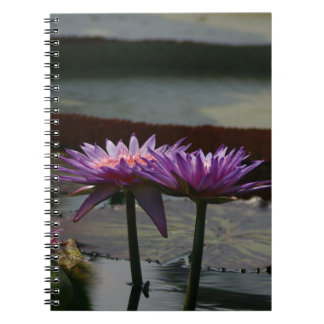 Purple Waterlilies Lotus Notebook