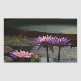 Purple Waterlilies Lotus sticker