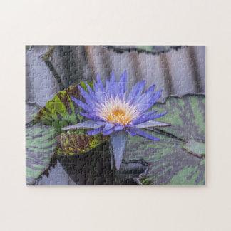 Purple waterlily photo puzzle