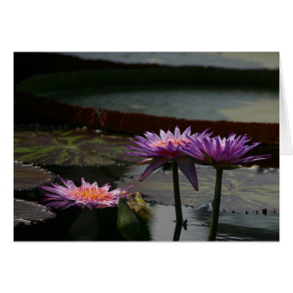 Purple Waterlily Waterlilies Lotus Card