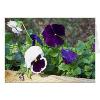 Purple & White Pansy Card