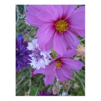 purple wildflowers postcard