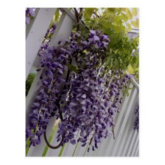Purple Wisteria on Fence Floral Postcard