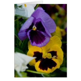 Purple & Yellow Pansies Greeting Card