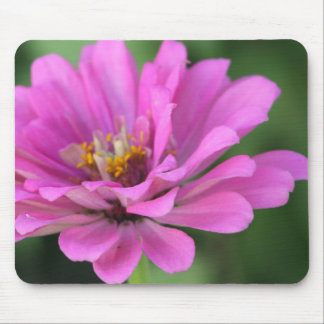 Purple Zinnia Mouse Pad