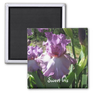purpleirisises, Sweet Iris Magnet