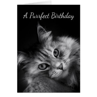Purrfect Birthday Wishes Card