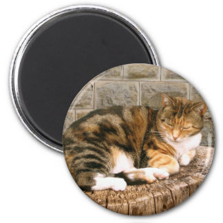 Pussels - Cat on a Stump Magnet