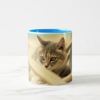 pussy at vacation Two-Tone coffee mug