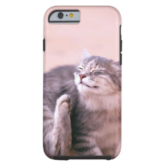 pussy in care tough iPhone 6 case