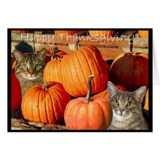 Pussycats and Pumpkins Card