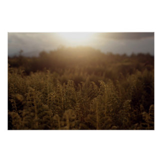 Putney Mountain Sunset Poster