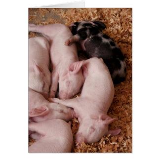 Puyallup Fair Piglets Card