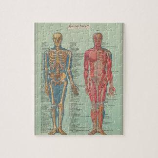 Puzzle - Anatomy