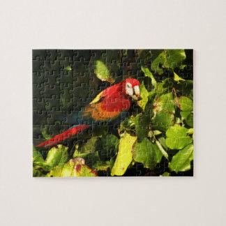 Puzzle/Box Scarlet Macaw Jigsaw Puzzle