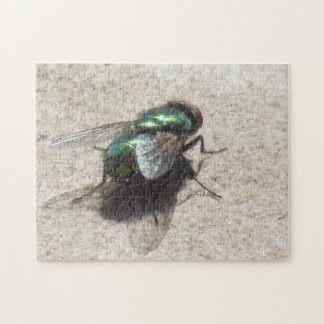 Puzzle - House Fly