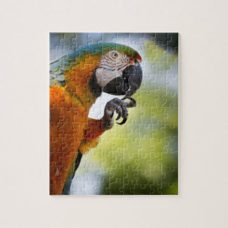 puzzle picture of a macaw