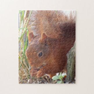 PUZZLE Squirrel squirrel - photo: JL Glineur