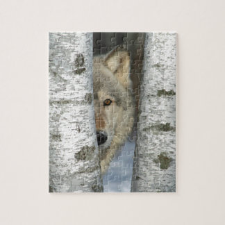 puzzle with photo of gray wolf in some birch trees
