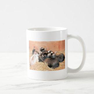 Pygmy goat coffee mug