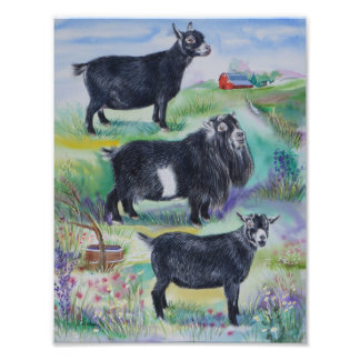 Pygmy Goat Doe, Buck & Wether Champions 2013 Photo Print