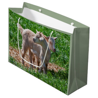 Pygmy Goat Kids Gift Bag