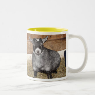 Pygmy Goat, Not a morning person Two-Tone Coffee Mug