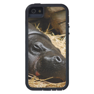 Pygmy Hippo iPhone 5 Cases