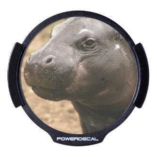 Pygmy Hippo LED Auto Decal