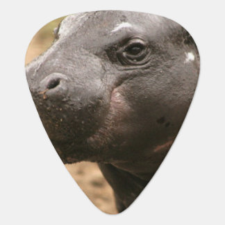 Pygmy Hippo Pick