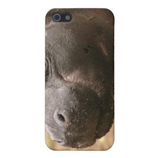 Pygmy Hippo iPhone 4 Case