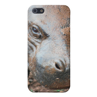 Pygmy Hippo iPhone 5 Case