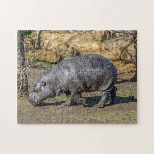 Pygmy hippo photo puzzle