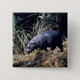 Pygmy Hippo-small calf 2 Inch Square Button