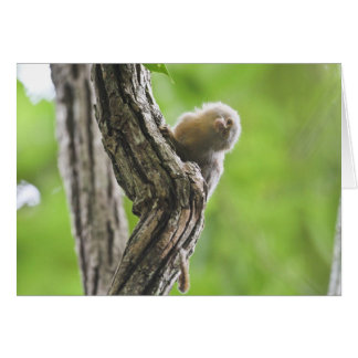 Pygmy Marmoset Card