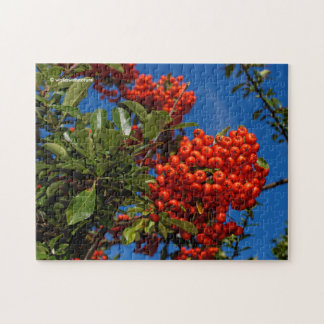 Pyracantha Coccinea / Scarlet Firethorn Puzzles