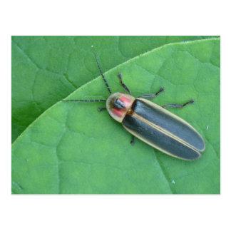 Pyralis Firefly Postcard. Postcard