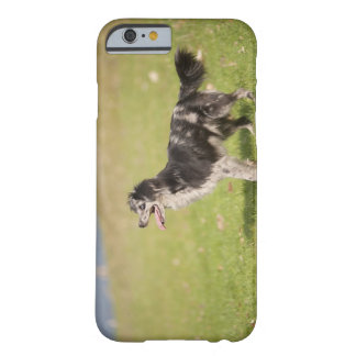 Pyrenean shepherd in alert pose waiting for barely there iPhone 6 case