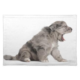 Pyrenean Shepherd puppy (4 weeks) yawning Place Mat