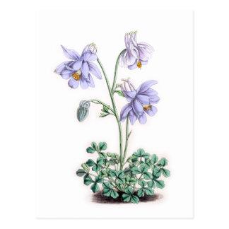 Pyrenees Columbine - Aquilegia pyrenaica Postcard
