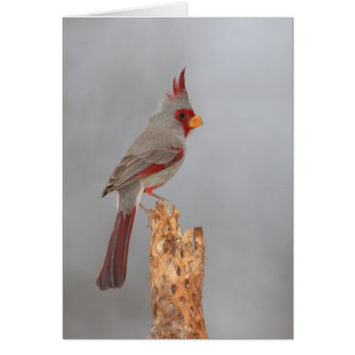Pyrrhuloxia on a branch card