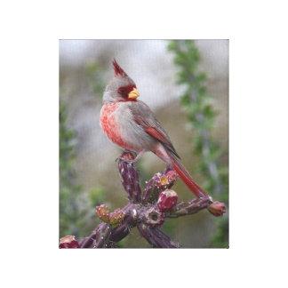 Pyrrhuloxia or Desert Cardinal Canvas Print