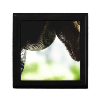 Python Just Hanging Jewelry Box